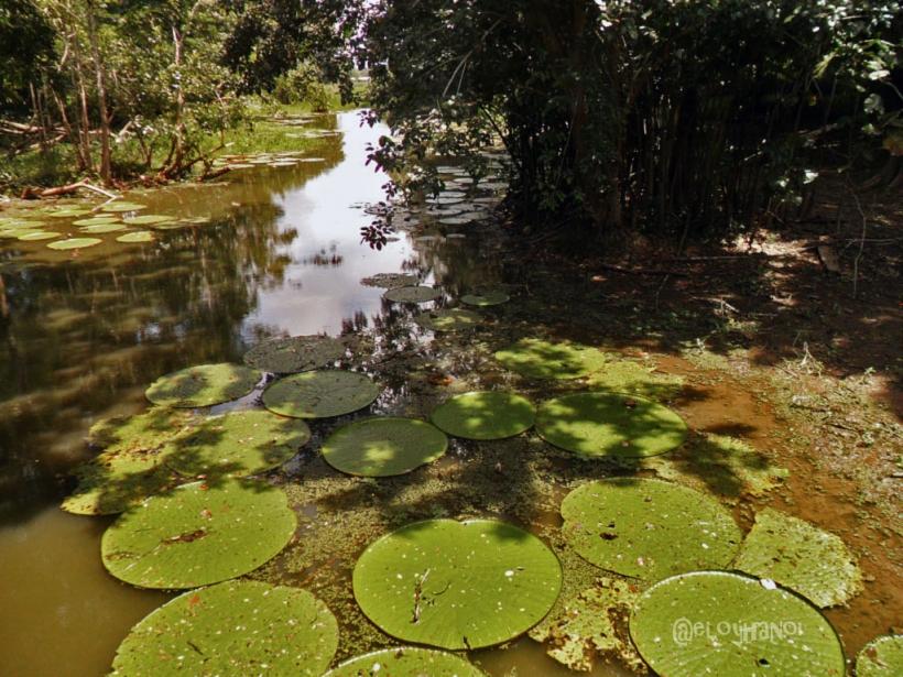 Foto de Leticia, Amazonas en Colombia